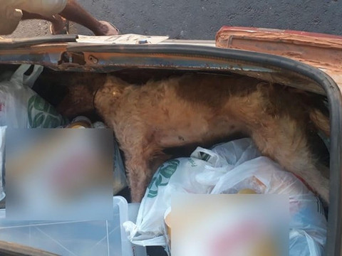 Cachorro morre trancado em porta-malas de carro enquanto dono fazia compras