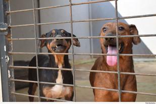 Tribunal de Justiça do Paraná decide que Animais podem ser autores de ações judiciais contra pessoas