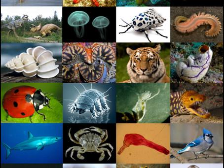 La Diversité d'être et la biodiversité