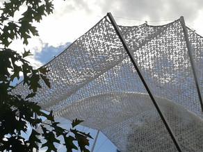 La Bulle des Faïsses, unique bulle à  calyptra au monde