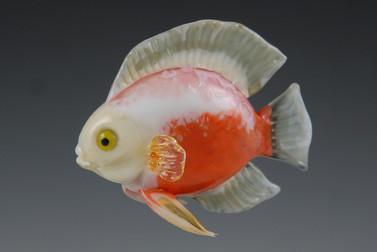 Red White Discus Fish