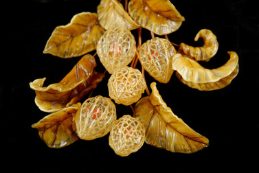 Chinese Lantern Pods & Leaves