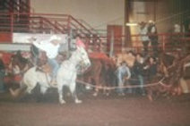 Calf Roping Sunday