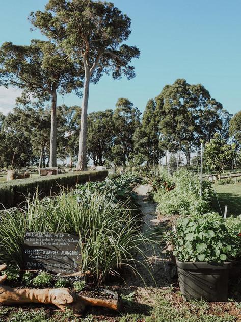Glenarty Rd Garden