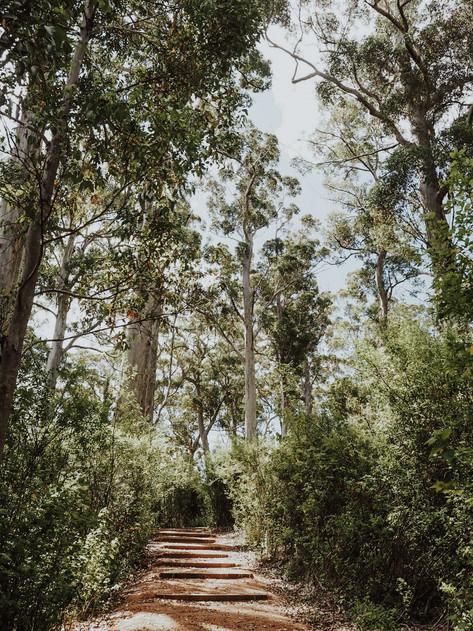 Mt Chudalup Walk Trail