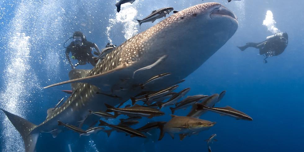杜馬蓋地 與鯨鯊共游 Dumaguete