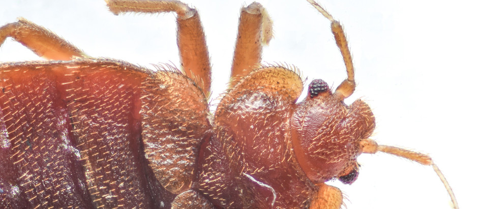 Keep Bed Bugs Out of Your Summer Vacation Plans