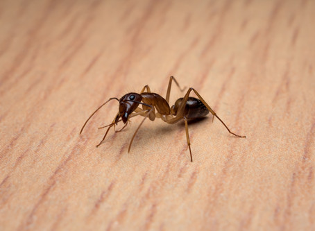 Why Do I Have Ants in My Bathroom?