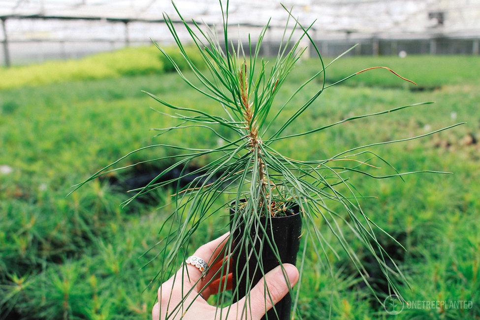 One Tree Planted-47.jpg