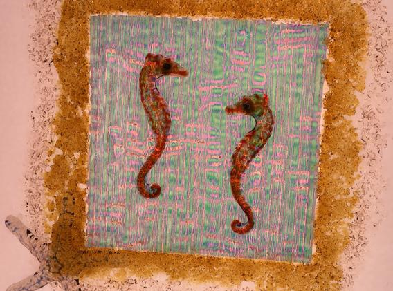Sea Horse Dance