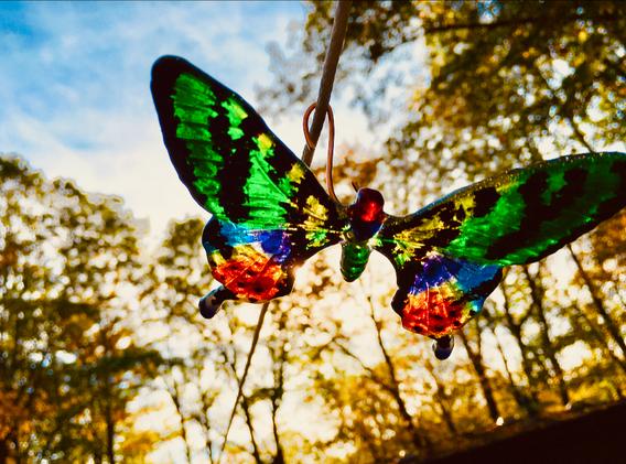 Madagasgar Sunset Butterfly