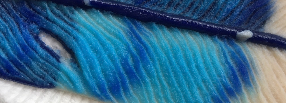Blue Jay Detail