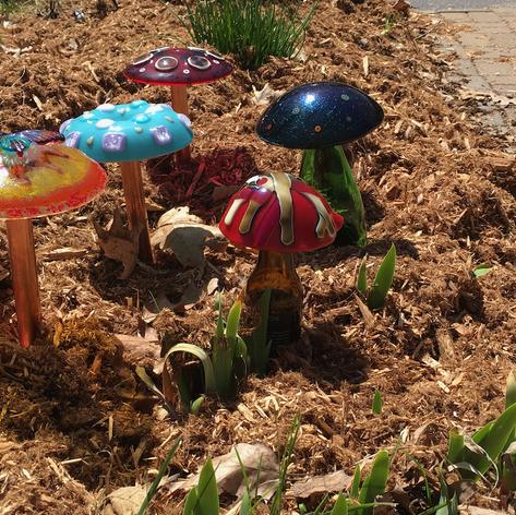 Spring Mushrooms