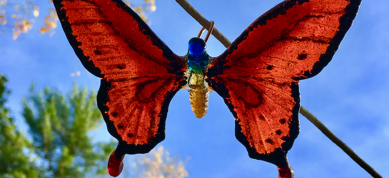 Orange Butterfly outdoors