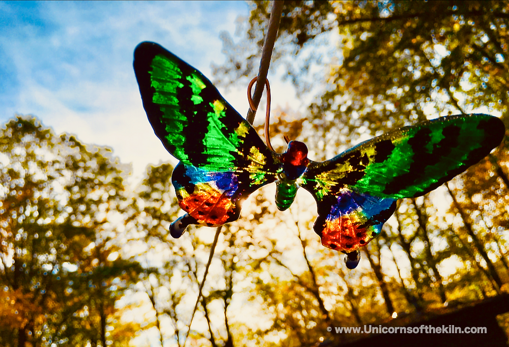 fritcast butterfly Madagascar Sunset Moth butterfly