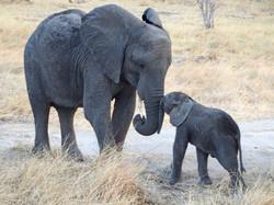 elephant_plus_child_1