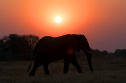 elephant_sunset_1