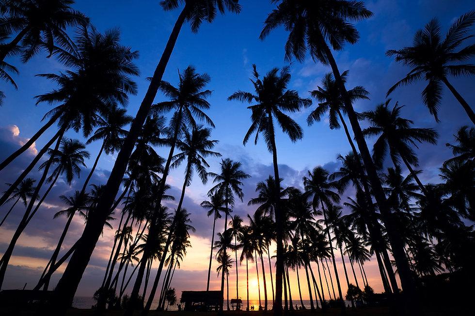 palm-tree-sunset-P7CYMRU.jpg