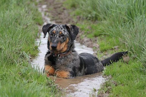 kPNI, hond in water, ook in de winter, kode, warmte, modder, microbioom