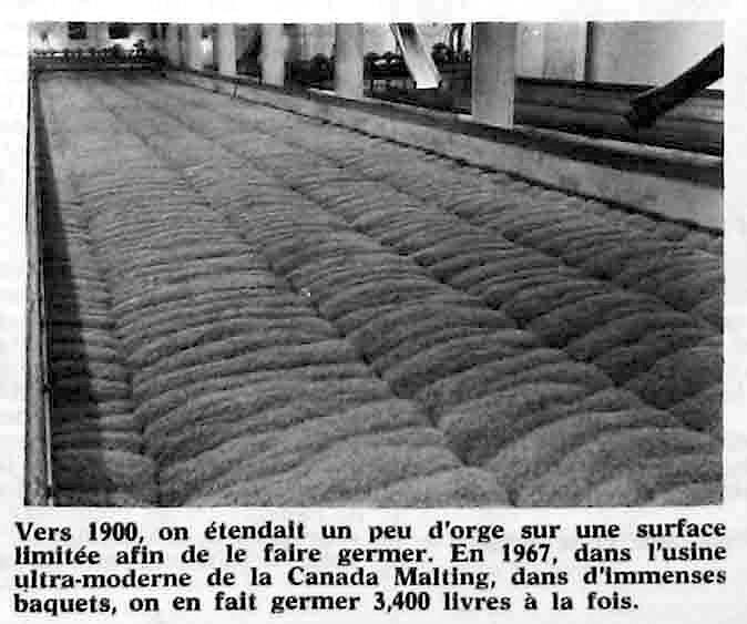 Salle de germination