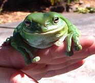 Bertha oldest Frog