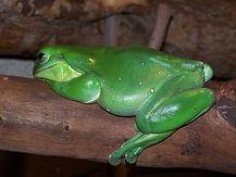 Oldest Frog Bertha