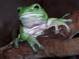 Frog Hire Sydney