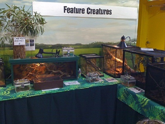 Reptile Display