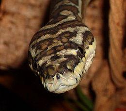 Snake Hire Python Hire Animal Hire