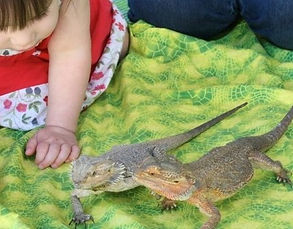 Reptile Show Incursion
