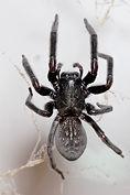Spider Hire in Sydney