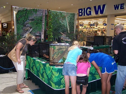 Wildlife Display