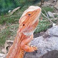 Reptile Hire