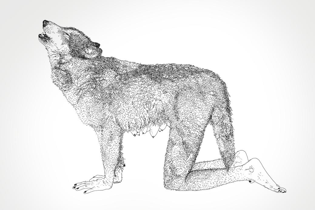 Gray Wolf  2011