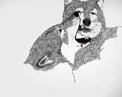 Two wolves 2012