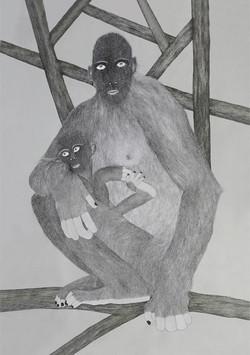 Primates 2015-2017