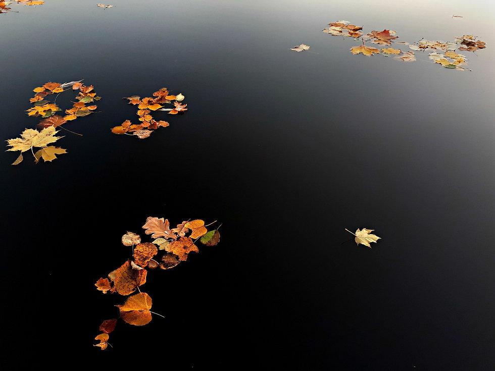 autumn-3752907_1920.jpg