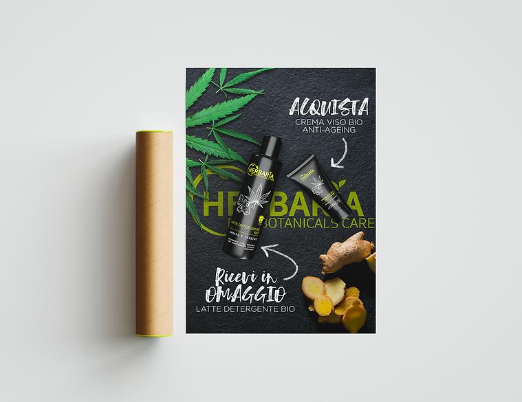 herbaria_2.png