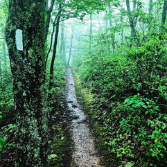 So Much Rain brings So Much Green!  #fla