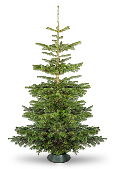 christmas tree from site .png