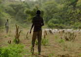 Man tends to his goats, Kenya. Lillian Lincoln Foundation.