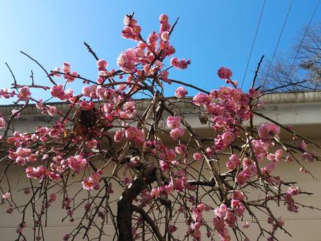 奥蓮台寺荘は春の気分