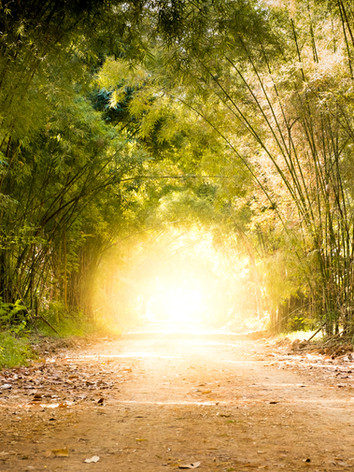 road through bamboo forest and light at