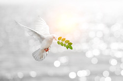 Dove carrying leaf branch and internatio