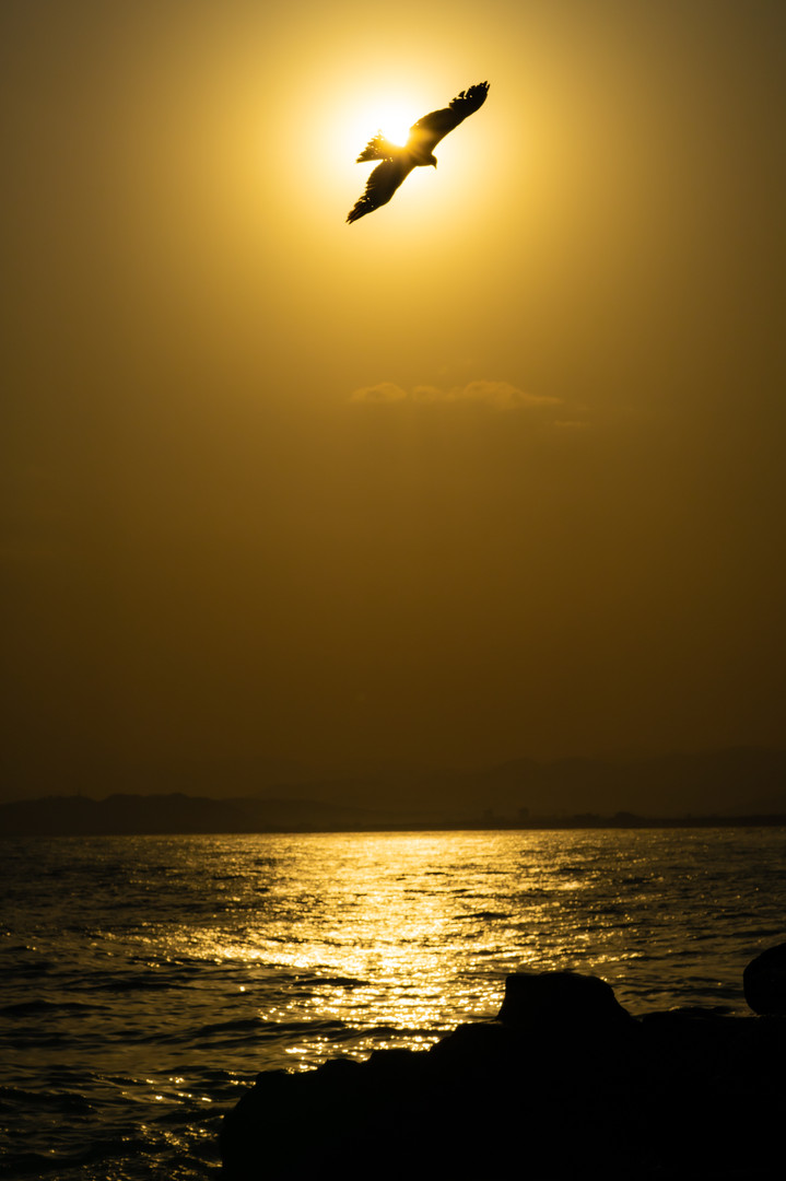 Silhouette of the eagle with sunset alon
