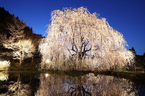 立石相野の花2.jpg