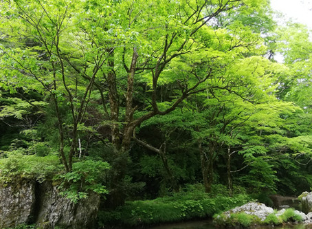 小田深山の春