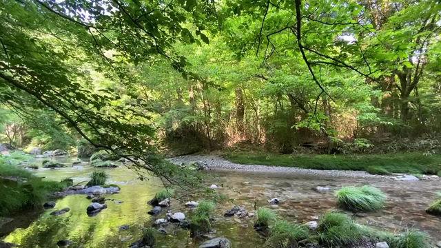 夏のイベント情報<涼を求めて、夏の小田深山へ行こう>