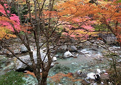 紅葉と綺麗な水