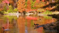 Fall is here! - Duke Gardens, Durham
